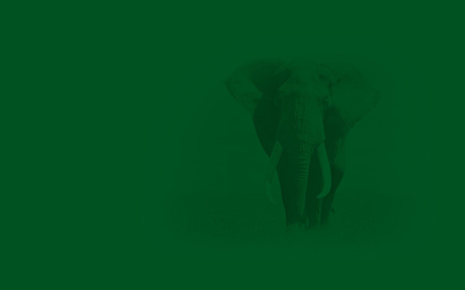 fond-vert-elephant-1